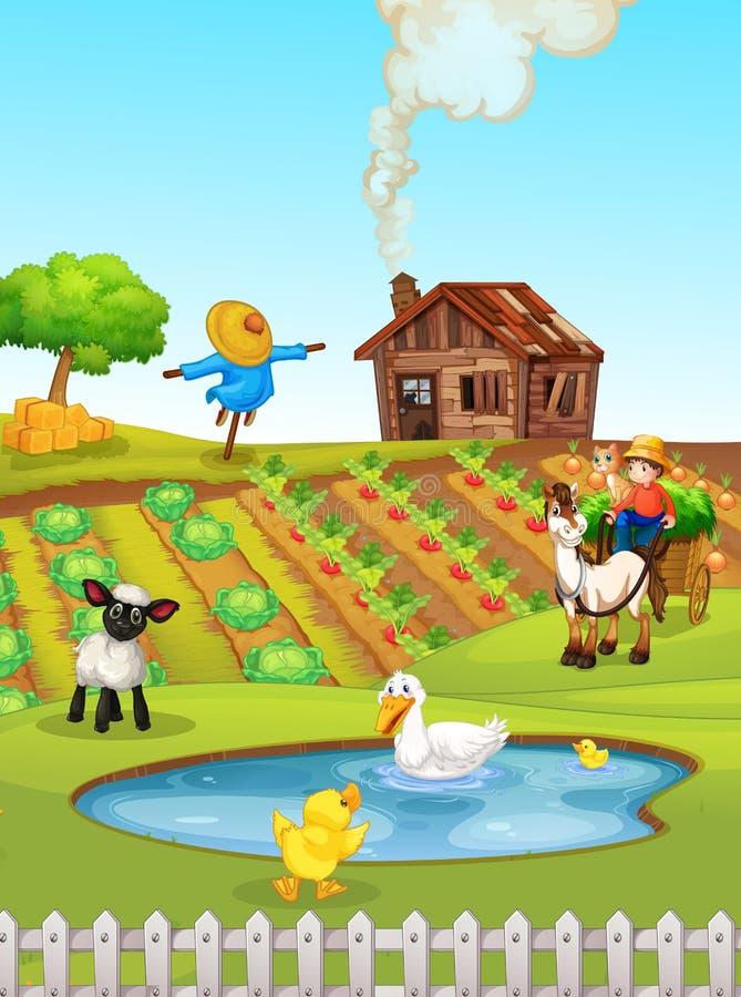 Ett lantligt jordbruksmarklandskap stock illustrationer