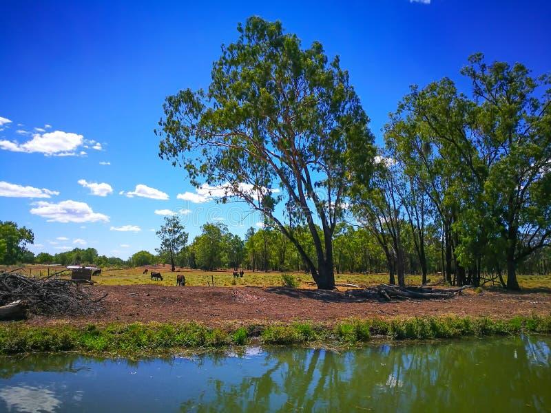 Ett lantligt lantgårdområde med kanalen i Emerald Queensland, Australien fotografering för bildbyråer