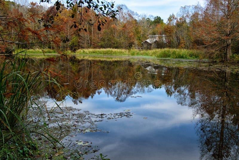 Ett litet damm på den BogueChitto delstatsparken arkivbild