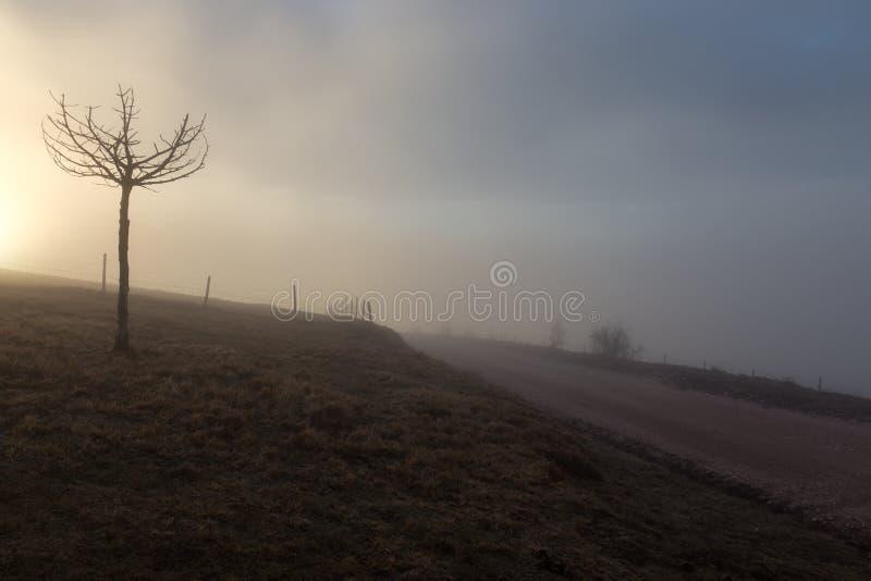 Ett litet träd nära en bergväg och staket, med dimma och låg su arkivfoton