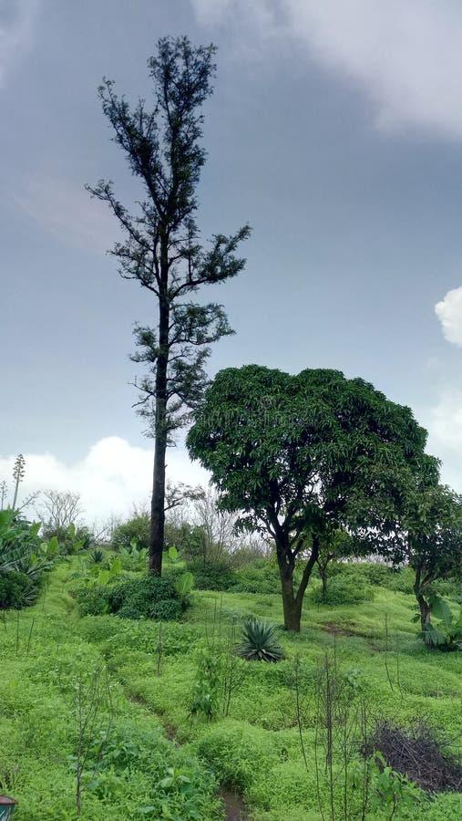 Ett litet träd och stort träd fotografering för bildbyråer