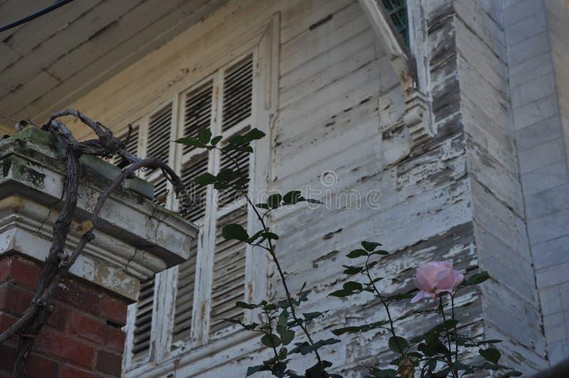 Ett lokalt hus och rosor royaltyfri foto