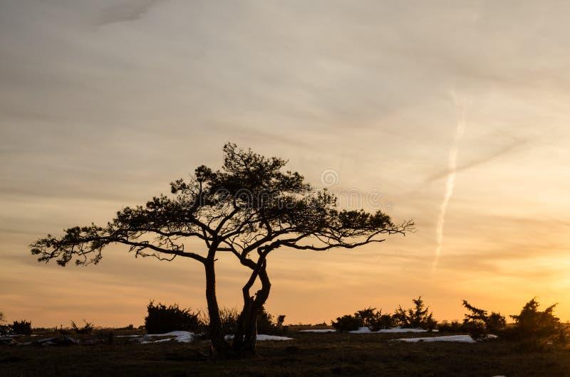 Sörja treen på skymningen royaltyfria foton
