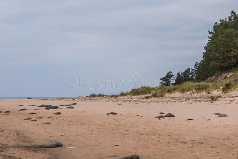 Ett lugna strandlandskap i Lettland Härligt sjösidalandskap på det baltiska havet royaltyfri bild