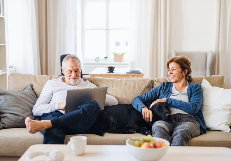 Ett lyckligt högt par som inomhus sitter på en soffa med en husdjurhund hemma, genom att använda bärbara datorn royaltyfri fotografi