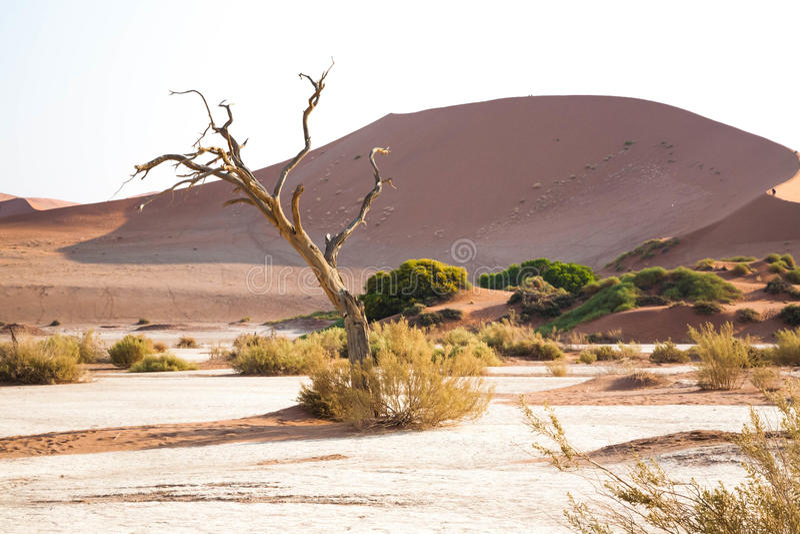 Ett namibian landskap royaltyfria bilder