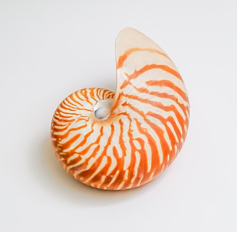 Ett Nautilussnäckskal som isoleras på en vit bakgrund royaltyfria bilder