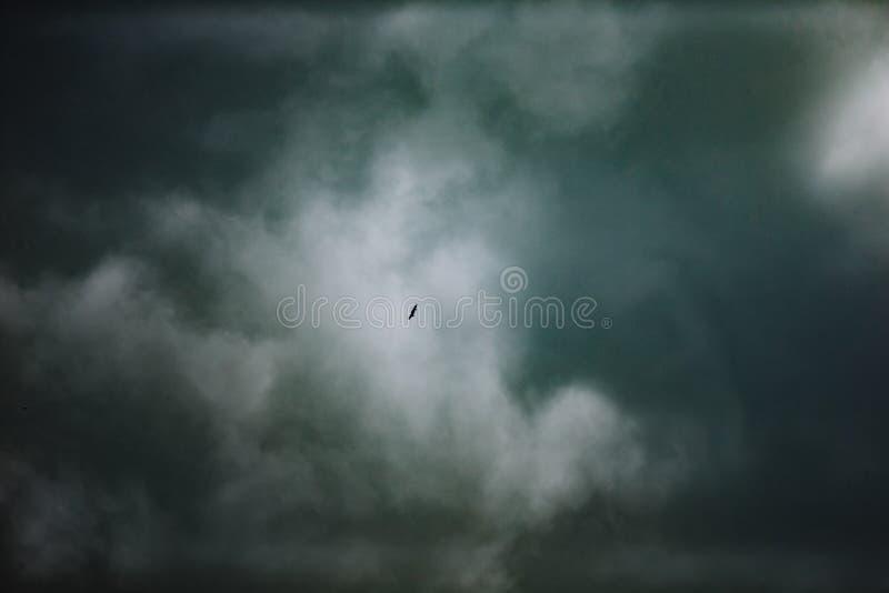 Ett par av örnar skjuta i höjden högt i den molniga sommarhimlen Sulak kanjon, Dagestan royaltyfri bild