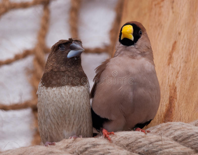 Ett par av fåglar royaltyfri foto
