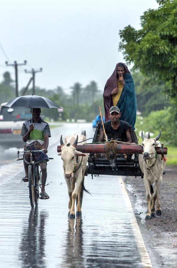 Ett par av oxar drar en vagn längs vägen nära Batticaloa på ostkusten av Sri Lanka arkivfoto