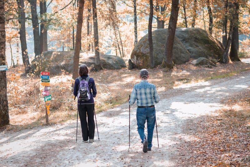 Ett par gå den ho parkerar med att fotvandra pinnar skog förälskelse, sport som joggar, pensionär som är sportig; royaltyfri fotografi