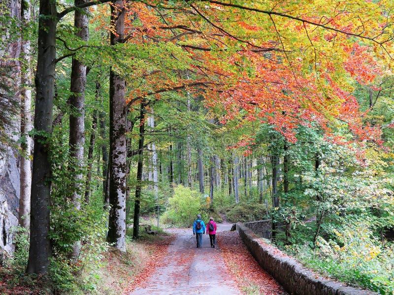 Ett par som går sidan - förbi - sid längs den sceniska vandringsledet i en härlig höstskog royaltyfria foton