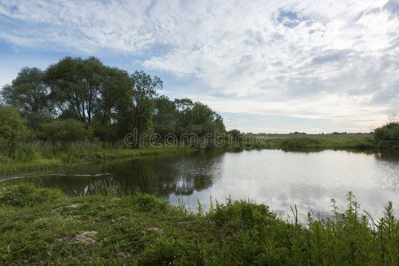 Ett pittoreskt damm med bevuxen gräsplan packar ihop och fördunklar i den blåa himlen fotografering för bildbyråer
