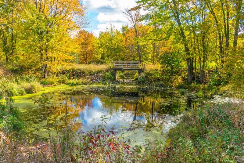 Ett pittoreskt landskap för höstskogreflexion med spången över dammet arkivfoton