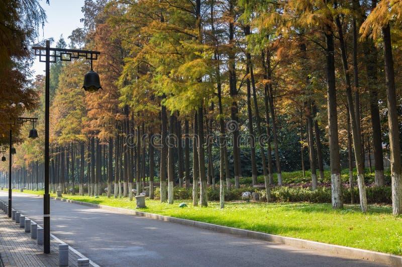 Ett Riverbeach trä i Kina royaltyfria bilder