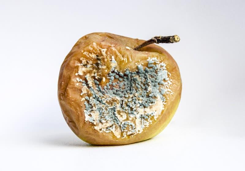 Ett ruttet äpple som täckas med formen royaltyfri bild