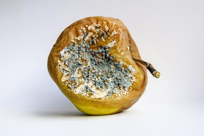 Ett ruttet äpple som täckas med formen arkivfoto
