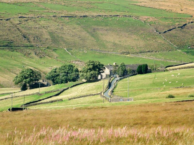 Ett sceniskt västra - landskap för yorkshire pennineland med får som betar i sten walled backefält med ett gammalt lantbrukarhem arkivfoto