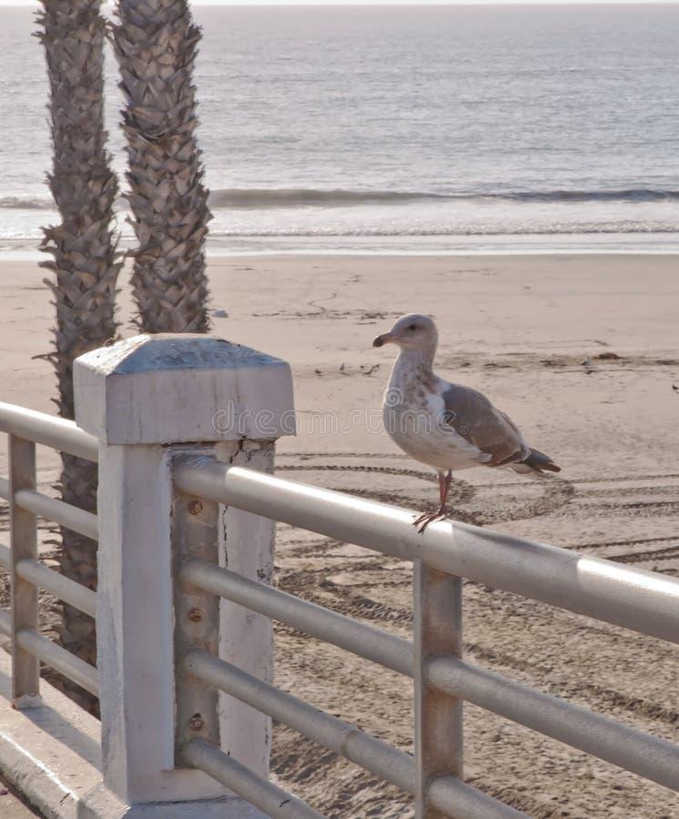 Ett seagull sett sammanträde på en metallräcke royaltyfri foto