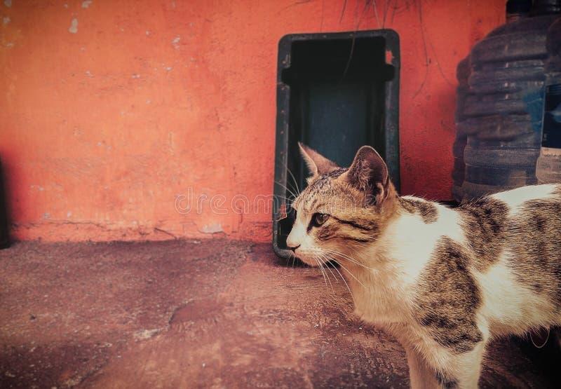 Ett sidoslut upp skottet av katten som ser till vänstra sidan royaltyfria bilder