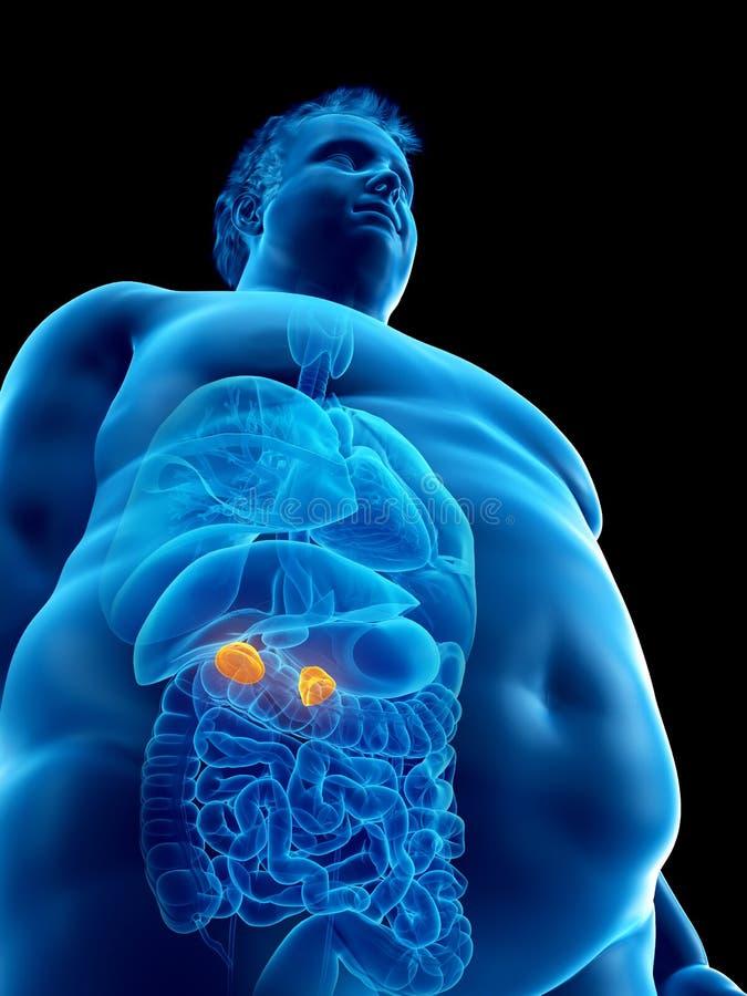 Ett sjukligt fett mans binjure vektor illustrationer