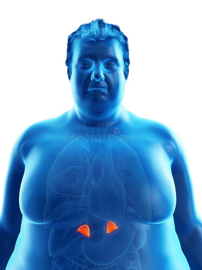 Ett sjukligt fett mans binjure stock illustrationer