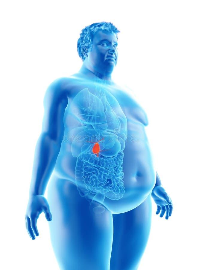 Ett sjukligt fett mans gallbladderen stock illustrationer