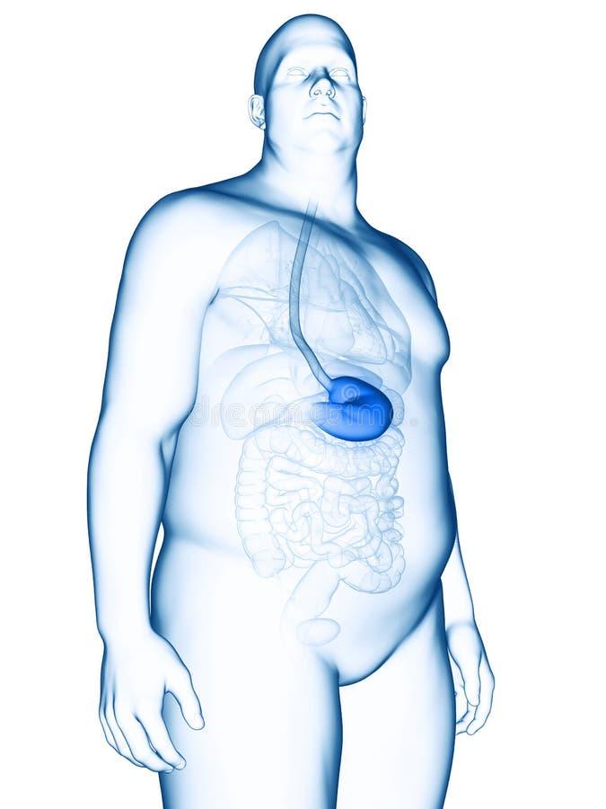 Ett sjukligt fett mans magen vektor illustrationer