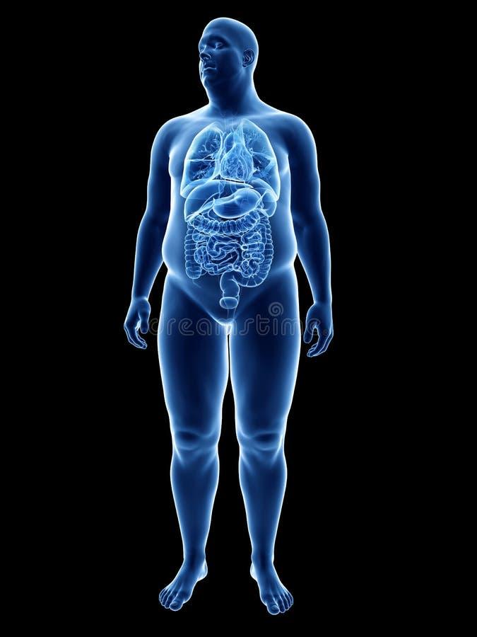 Ett sjukligt fett mans organ royaltyfri illustrationer