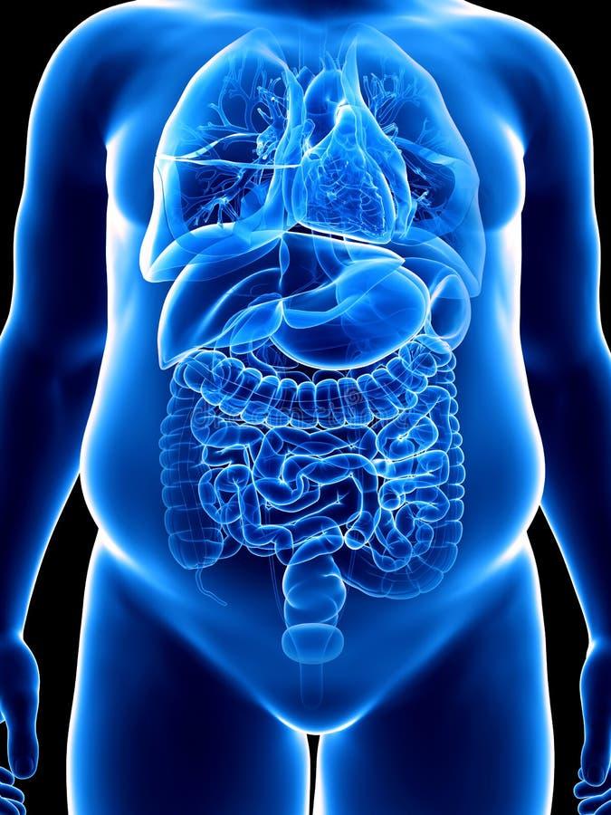Ett sjukligt fett mans organ vektor illustrationer