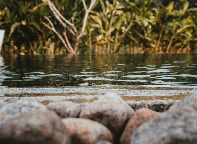Ett skott av en sjö med vaggar främst och grönska arkivfoton