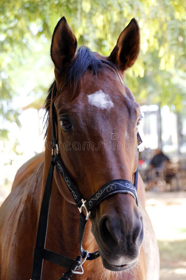 Ett skott för hästhuvud i Israel royaltyfria bilder