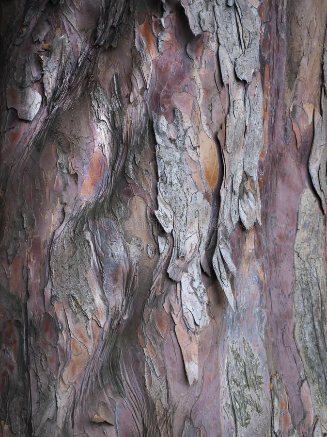 Ett slut upp av älskvärd textur för trädskäll arkivbilder