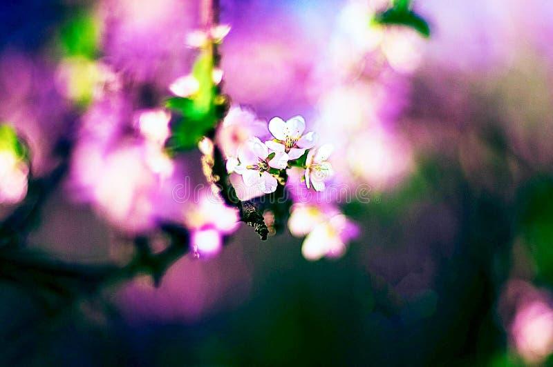 Ett slut upp av en blomma arkivfoto