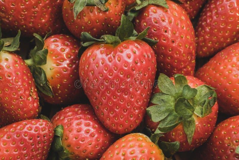 Ett slut upp av en grupp av jordgubbar royaltyfri fotografi