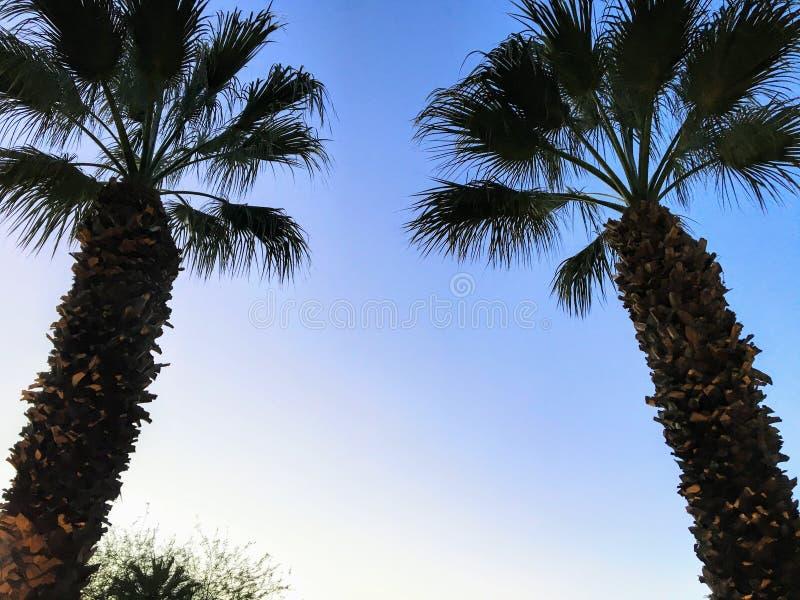 Ett slut upp av två palmträd som gjutas i skugga, som de når för himlen på en härlig afton i Palm Desert, Kalifornien royaltyfri bild