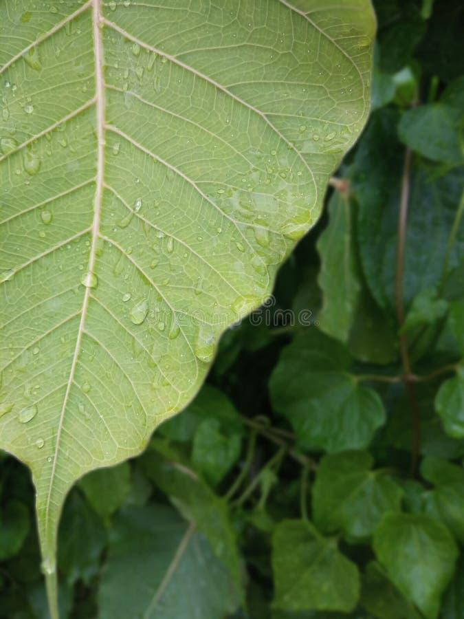 Ett slut upp bild av ett grönt blad royaltyfria foton