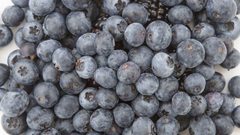 Ett slut upp högen av nya frodiga blåbär arkivbild