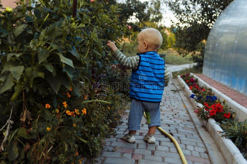 Ett sm?barn promenerar en bana bredvid en rabatt, unders?ker blommor fotografering för bildbyråer