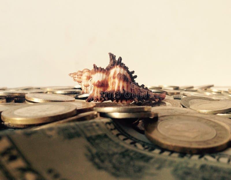 Ett snäckskal på en strand av mynt royaltyfri fotografi