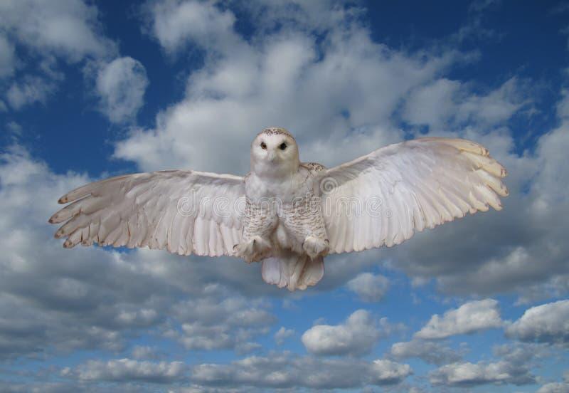 SnowOwl royaltyfri foto