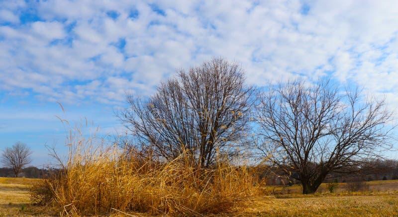 Ett sortiment av vinterpenseldrag, inklusive kala träd, guld- vete och molnet pusta arkivfoto