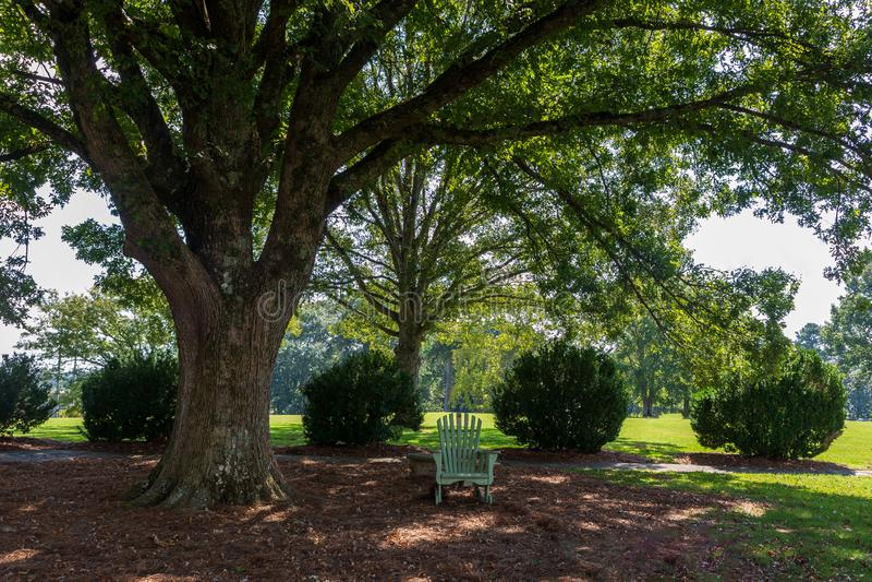 Ett ställe av avkoppling i en Adirondack stol under ett stort fördelande träd royaltyfri bild