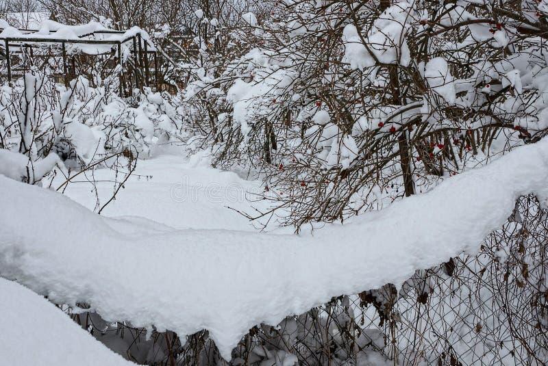 Ett staket av järningreppet under en snödriva i en wintergarden arkivbilder