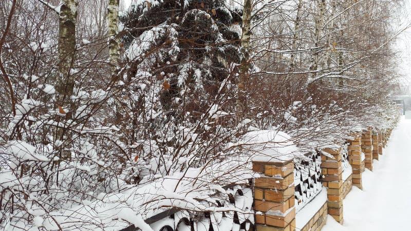 Ett staket och träd under snö fotografering för bildbyråer