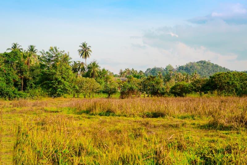 Ett stort grönt fält med ett berg i bakgrunden royaltyfria foton