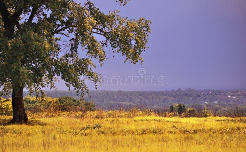 Ett stort grönt träd som står bara i ett fält i sommaren royaltyfri foto