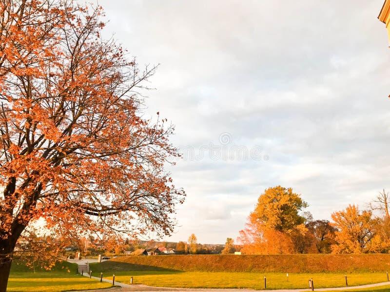 Ett stort härligt naturligt träd med en tjock stam som sopar röda och gula stupade höstsidor för filialer, Hösten landskap royaltyfri foto