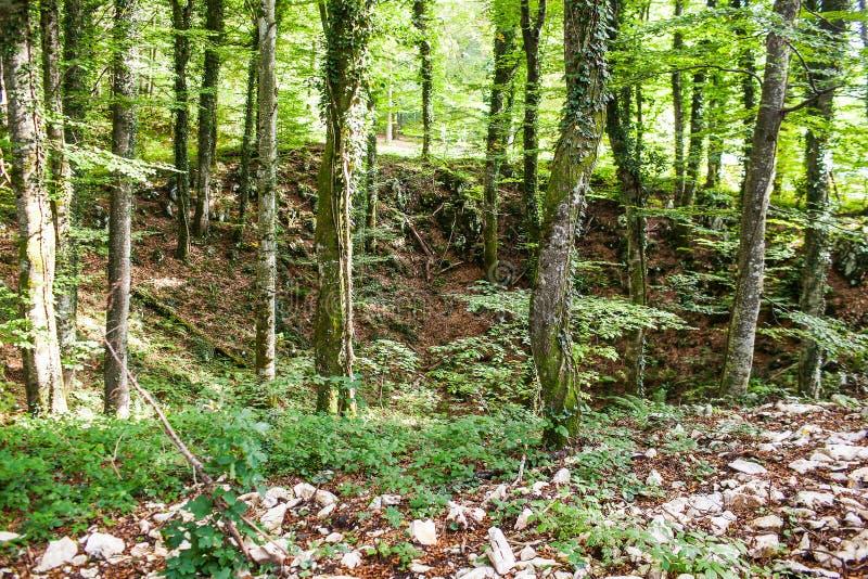 Ett stort hål i skogen med träd som är bevuxna med mossa fotografering för bildbyråer