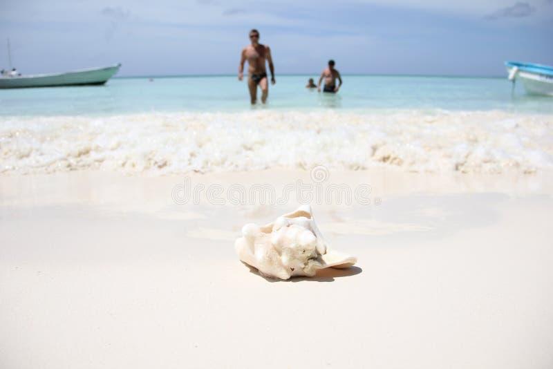 Ett stort havskal av rosa pärlemorStrombusgigas ligger på den vita sanden på det karibiska havet på ön av royaltyfri fotografi